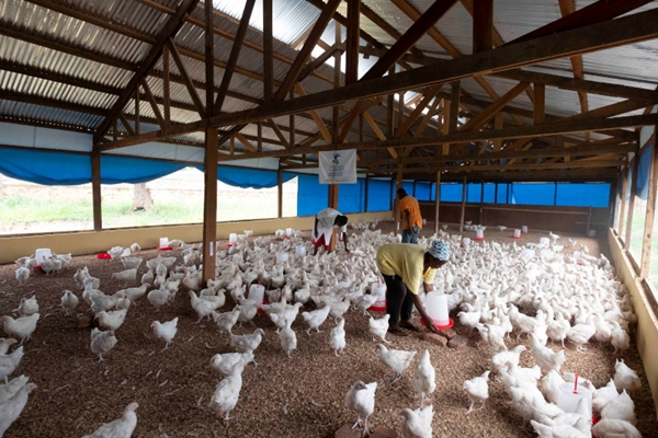 Repubblica centrafricana, la via alla sicurezza alimentare in una crisi senza precedenti