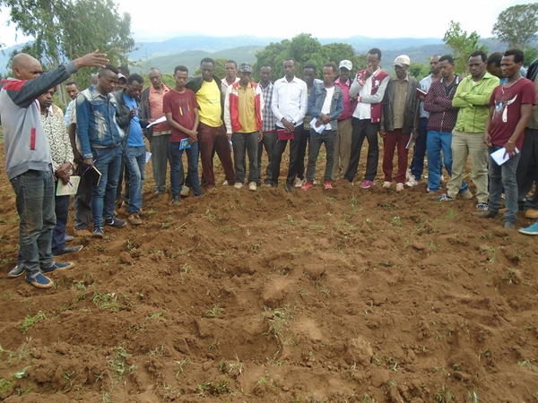 Formazione agricola, Etiopia