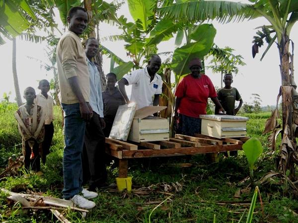 Laboratori di apicoltura, Mozambico