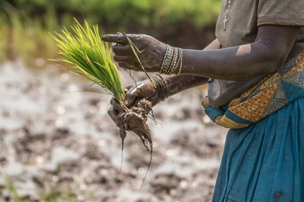 Sviluppo agropastorale